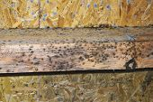 mold on construction wooden elements; the development of mildew is favored by air humidity and damp wood poster