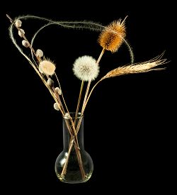 Isolated Image Of Dried Flowers In Vase