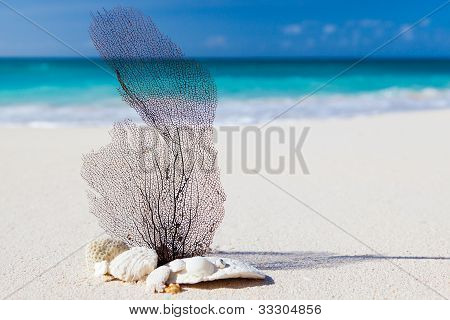 Sea And Beach Concept