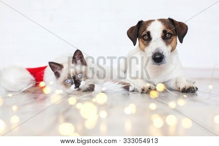Cat in christmas hat and dog. Kitten and puppy in christmas lights