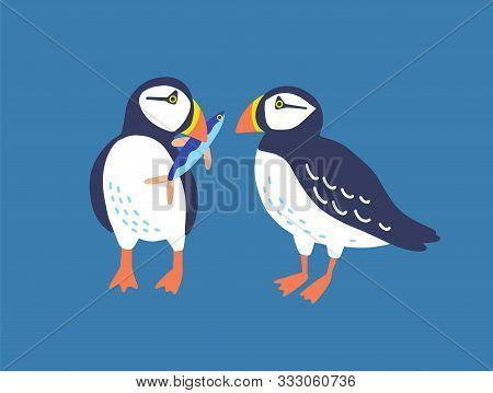Atlantic Puffins Flat Vector Illustration. North Fauna, Wildlife. Red Book Bird. Seafowl With Fish I