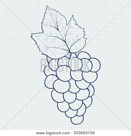 Bunch Of Grapes. Sketch On Lined Paper Background. Vector Illustration