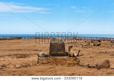Cape Cross, Namibia - March 30, 2019 : Seals At The Cape Cross Seal Reserve In Namibia And Its Entry