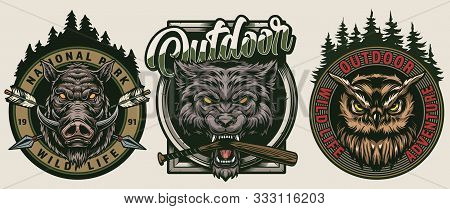 Colorful Vintage Wildlife Badges With Inscriptions Forest Landscapes Crossed Arrows Serious Owl And