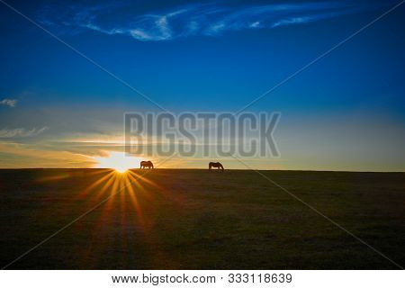 Thoroughbred Horses Grazing With The Setting Sun.