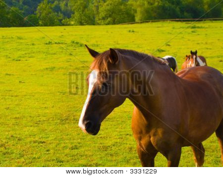 Horse in Beautiful Green Field in British Summer Morning poster