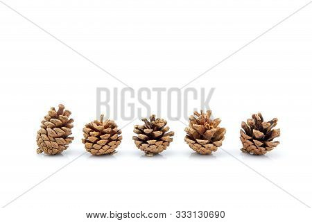 Image Group Of Pinecone Isolated On White Background, Set Of Pine Cone Tree Is Symbol Decoration Chr