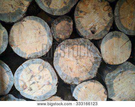 Felling Of A Tree, Log, Firewood. Lumberjack. Background Of Wood. Sawn Pine. Natural Tree Bark. Back