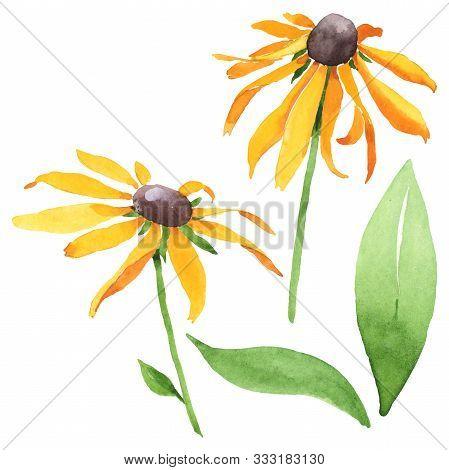 Rudbeckia Hirta Floral Botanical Flowers. Watercolor Background Set. Isolated Rudbeckia Illustration