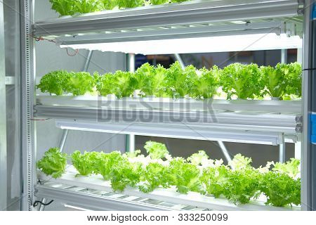 Plant Growing In Smart Indoor Farm With Artificial Led Light. Phyto Lamp For Seedling & Cultivation