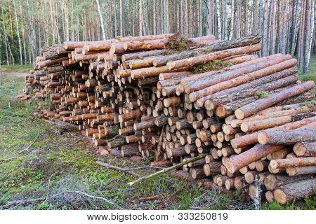 Natural Wooden Logs Cut And Stacked In Pile, Felled By The Logging Timber Industry. Trunks Of Felled
