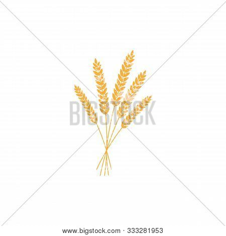 Vector Illustration Of Wheat, Rye Or Barley Ears With Whole Grain, Yellow Wheat, Rye Or Barley Crop