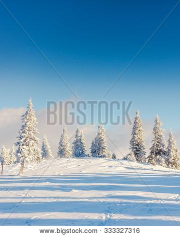 Awesome winter landscape and covered snow trees. Dramatic wintry scene. Carpathian, Ukraine, Europe. Happy New Year! Image of breathtaking scenery, nature wallpapers. Discover the beauty of earth.