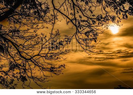 Orange Sky, Sunlight Shining Through Tree Shadows, Blurred Background, Siluette Background Of Nature