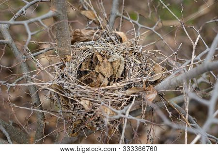 Empty Birds Nest Among Autumn Branches Of A Bush. Fallen Leaves Filled The Empty Abode Of Forest Bir