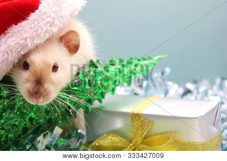A Rat In A Christmas Hat With The Christmas Tree And The Gift. The Concept Of The New Year 2020. Yea