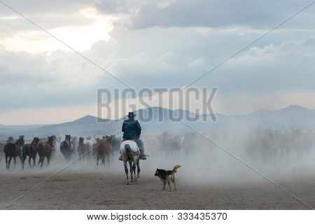 Cowboy and wild horses in an cloudy sunset