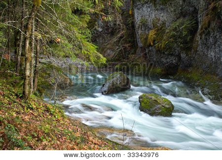 Beautiful Slow Water Forest River