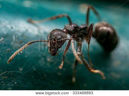 Macro Photography Of Tiny Black Garden Ant On Turquoise Floor