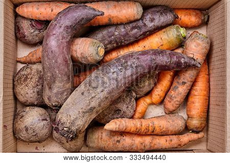 Farm Harvest, Fresh, Unwashed, Dirty Vegetables, Carrots And Beets In A Cardboard Box. Vegetarian, O