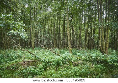 Picture Of A Dense Dark Primeval Forest.