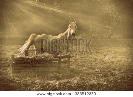 A White, Graceful Horse In The Haze Beside A Box Of Hay. Portrait Of An Animal In A Mystical Style.