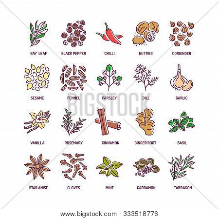Spices And Herbs Color Line Icons Set. Seasonings: Ground Pepper, Fennel, Cinnamon, Cloves, Ginger