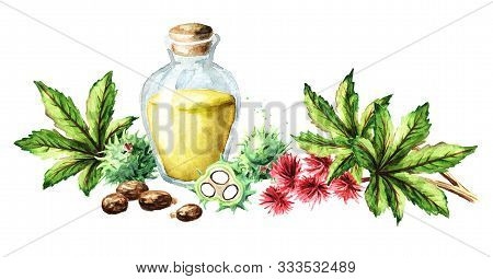 Castor Oil Bottle With Green Castor Fruits, Beans, Flowers, Leaves And Seeds. Watercolor Hand Drawn