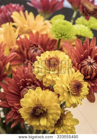 A Bouquet Of Colorful Mum Flowers.  An Assortment Of Different Colored Mum Flowers From A Small Bouq