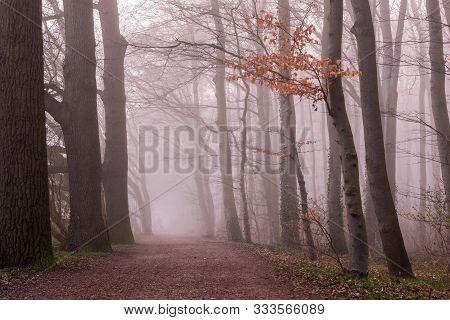 Thick Elegant Forest With Fog Fantasy Landscape