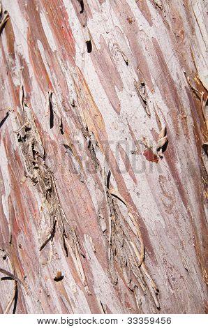 Arizona Smooth Cypress Bark