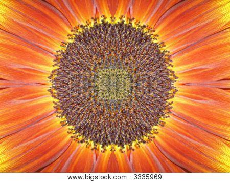 Closup Sunflower