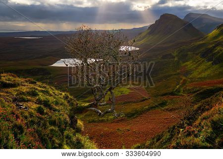 A Very Famous Tree That You Cannot Miss If You Visit Quiraing