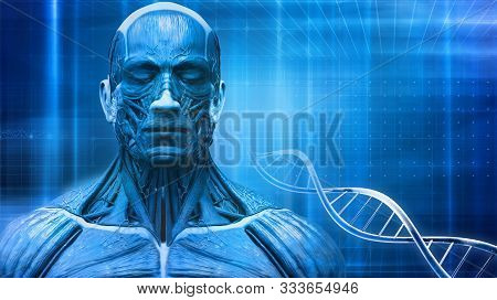 Abstract Background Of The Human Body Anatomy And Dna Symbol , Muscle Anatomy Background With Blue W