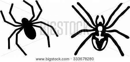 Spider Icon On White Background Tattoo, Vector, View, Web.