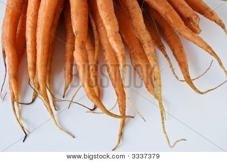 Close Up Detail Of Carrots From The Garden