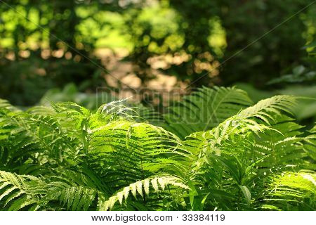 large green fern bush in the forest poster