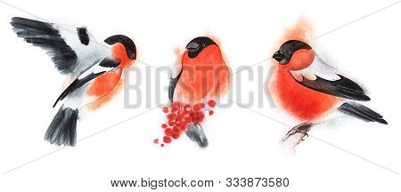 Set Of Three Decorative Elements. Bullfinch On Fly. Birds Fly And Sit. Red Winter Fluffy Bird. Chris