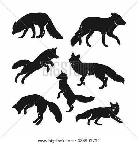 Set Of Fox Logo Vector. Animal Coyote Logo Design Template Illustration