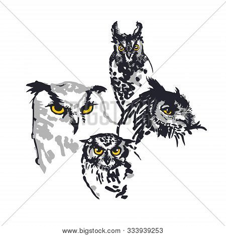 Group Of Owls Illustration. Set Of Four. Digitalized Sketches. Ink Brush-pen And Markers On Paper. B