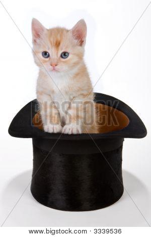 Magician'S Cat