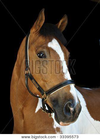 Horse Head On Black Background