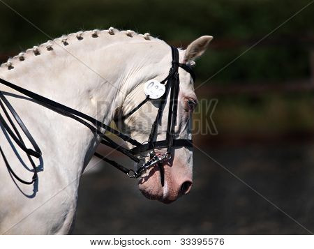 Horse In Double Bridle