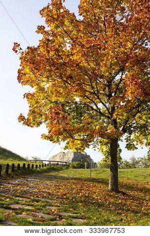 Bright Autumn Tree And Ruins Of Devin Hrad, Bratislava, Slovakia