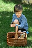 6-7 years old boy with basket of newborn chicken - vacation poster
