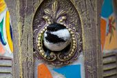 Black-capped chickadee peeks our of a birdhouse in the garden. poster