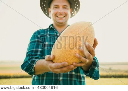 Selective Focus On The Melon. Caucasian Farmer Holds A Melon In His Hand, Its Harvest Time.
