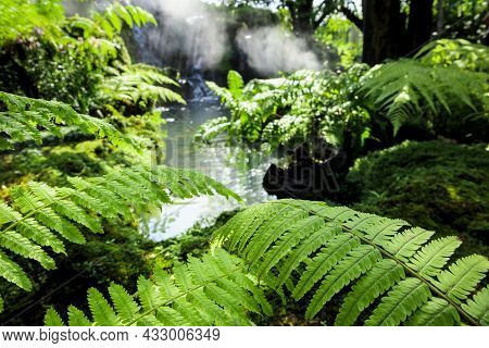 Closeup Wild Green Fern Leaves In Tropical Waterfall Rainforest Nature Background