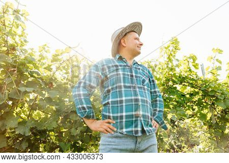 Winemaker With His Hands Crossed Is In His Vineyard With Vines. Happy Smiling Fat Farmer Caucasian S