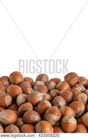 Hazelnuts In Shells On White Background. Isolated